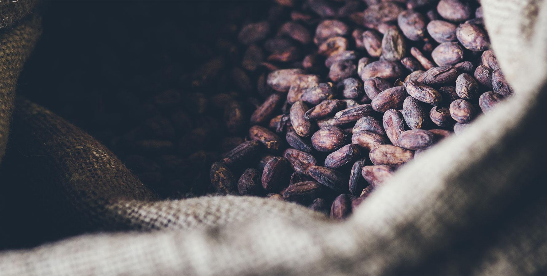 fond cacao